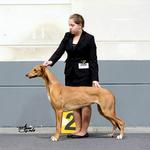 Mit Daisy (Greyhound) im Ring, Luxembourg LU 2016