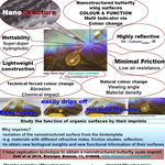 Nanopaprika Posterkonferenz: Multifunctionality of Butterfly wing surfaces