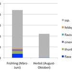 Anzahl Meldungen auf www.ornitho.ch im Frühling und Herbst (Stand Anfang September 2015)