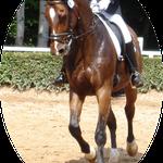 Luck Boy ein Bild von einem Pferd