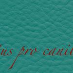 Lectus pro canibus® petrol Bestellnummer lpc-85141
