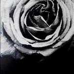 薔薇  2009
