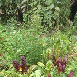 Gemüsegarten im Frühherbst