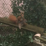 Eichhörnchennachwuchs