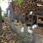 Beim Erkunden der Kaninchen