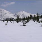 ⑧南八甲田駒ヶ峰より望む北八甲田の八甲田大岳(1585m)、小岳(1478m)。チシマザサの藪がなく見通しが良い。先端がのぞくオオシラビソの下には未だ5,6メートルも幹が雪下に。