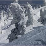 ②オオシラビソの樹氷。八甲田山の標高千メートル以上の所にはいたる所にこのような樹氷が見られる。