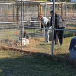 Unsere Tierärztin Kiki Tsakou beim einfangen von Lotta