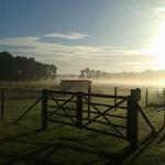 Unser Paddocktrail im morgendlichen Nebel