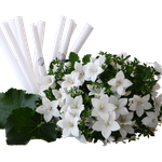 Chakrakerze Weiß - Reinigung