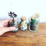 2017年4月 東京 自由が丘ワークショップ「3種類の植物を使ったミニテラリウム3個セット」