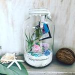 2017年8月 表参道&飯田1dayレッスン エアプランツと貝がらを使った『夏テラリウム』