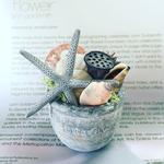 2016年 8月表参道 親子ワークショップ「貝殻を使ったアレンジメント」