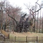 3月30日 桜木は気合い満々なるもお日様はそっぽ向き あーいつになったら仲良くなるの、、、