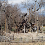 3月25日 文句なしの春 大勢の花見客に桜木は準備万端
