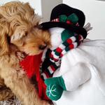 HARRY mit Freund dem Schneemann :)
