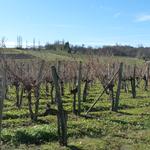 vignobles AOC de Bellocq