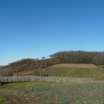 alternance de vignes,cultures, prairies et bosquets