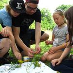 Die Kinder der GS Grünmorsbach erkunden auf spielerische Weise den Lebensraum Wiese