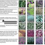 Senlis - Palette végétale