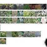Chaumont 2017 - Palette végétale