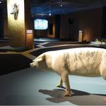 Musée des années 30 - Boulogne Billancourt • EXPOSITION SCULPTURES ANIMALIERES •
