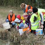 Marion Damm zusammen mit einer Kindergruppe beim Einsetzen der geretteten Kröten ins Laichgewässer (Foto: Jupp Schröder)