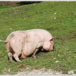 Raritäten-Zoo Ebbs