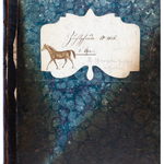 Das liebevoll verzierte Zuchtbuch A wurde 1840 eröffnet. Glücklicherweise überstand es den Brand in der Stiftsstatthalterei von 1983. Foto: KAE B-28