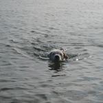 Lola schwimmt ..