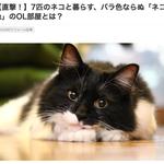 SUUMO リフォームタイムズ「7匹のネコと暮らす、バラ色ならぬ「ネコ色」のOL部屋とは?」