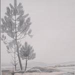 Burnot, le paysage au pin