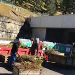 Blumenentsorgungsarbeiten: Plastikstabilisatoren entfernen, Bäumchen (= Holz) und Blumen trennen