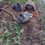 Tierheim Kaninchen misten, Futter sammeln, Gassi gehen