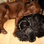 Барт и Шерри даже спят вместе)