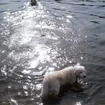 Варя в воде