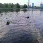 Барт и Норт плавают на перегонки