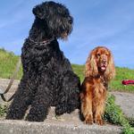 Грааль и Ральф ждут на берегу...
