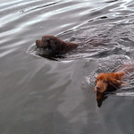Барт и Ральф плавают со мной по полчаса...