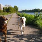 Барт и Яффа утром на прогулке