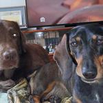 Батр и Салли дома