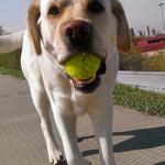 Яффа с мячом...