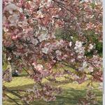 春の足超管理:東急大井町線荏原町駅徒歩30秒。姿勢矯正により根本原因の解消を目指します!カード利用可