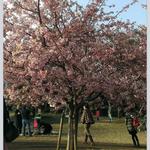 春の体調管理:東急大井町線荏原町駅徒歩30秒。姿勢矯正により根本原因の解消を目指します!カード利用可