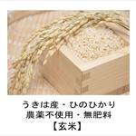 うきは産玄米