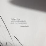 Bambou herbe, gravure pointe sèche, Zénitude, 2015