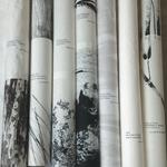7 bambous, Zénitude, 2015