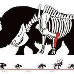 """Infografik """"Tiere der Eiszeit"""""""