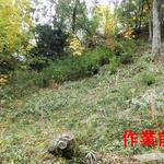 南側植林地