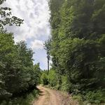 Gemarkung Blumberg, sterbende Buche